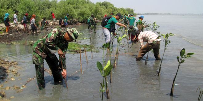 Atasi Abrasi dan Rob Air Laut, Danramil 02/Bonang Tanam Mangrove di Pantai Betahwalang Demak
