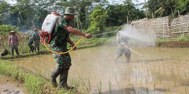 Babinsa Berlatih Menggunakan Alat Pertanian