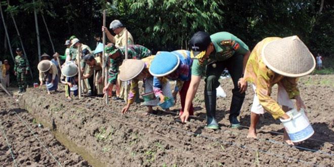 Dandim 0709/Kebumen Tanam Perdana Kedelai di Kec. Puring