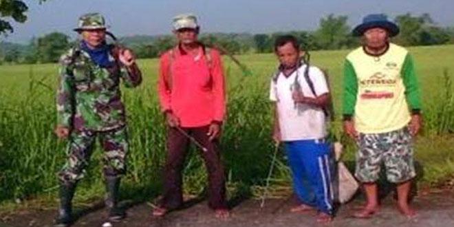 Kolaborasi TNI dengan Petani