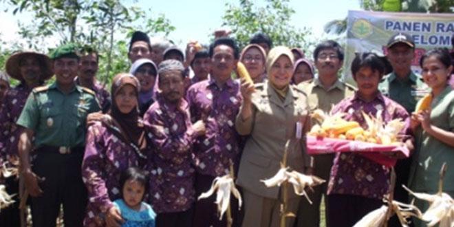 Program Swasembada Pangan, Dandim 0709/Kebumen Gelar Panen Raya Jagung