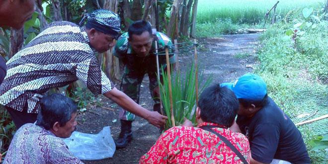 Penelitian Hama oleh Babinsa bersama PPL Propinsi Jateng di Pekalongan Selatan