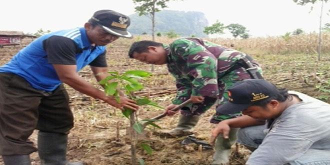 Penghijauan dengan Penanaman Pohon Mangga di Randudongkal