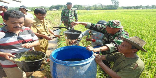 Penyuluhan dan Penyemprotan Hama Wereng Desa Candiareng