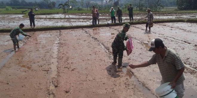 Penyemaian Bibit di Lahan Percontohan Kabupaten Batang