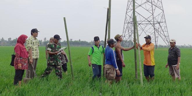 Koramil 13/Kedungbanteng Menyiapkan Tito Alba sebagai Eksekutor untuk Hama Tikus