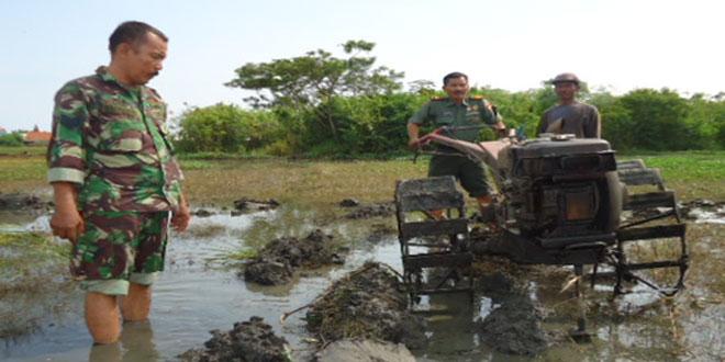 Pembajakan Tanah Untuk Persiapan Penanaman Padi