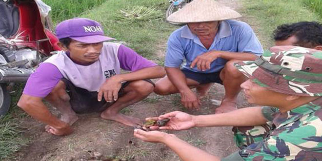 Babinsa Bersama Petani Basmi Hama Keong
