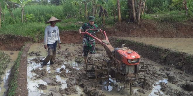 Anggota TNI Bantu Petani Bajak Sawah