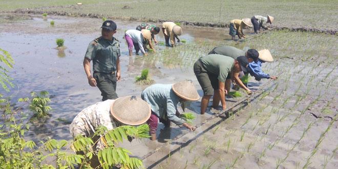 Pasis Seskoad Angkatan LIII Melaksanakan Penelitian Bidang Pertnian di Wilayah Kodim 0735/Surakarta