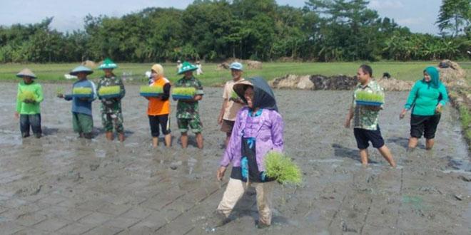 Babinsa Koramil 02/Gombong Melaksanakan Penanaman Padi Program Bantuan SRI