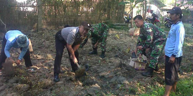 Koramil 03/Banjarejo Kodim 0721/Blora Budidaya Tanaman  Talas Bentul/Bogor