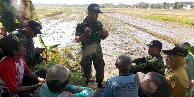 Koramil 14 Tugu Melakukan Pendampingan kepada Petani di Kel. Mangunharjo