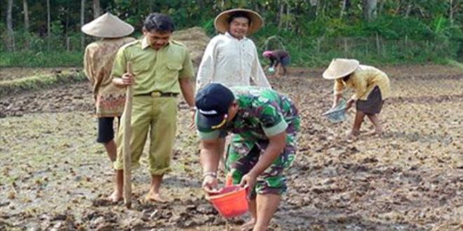 Anggota PPL dan Babinsa Bantu Tanam Kedelai di Wilayah Kec. Nguntoronadi