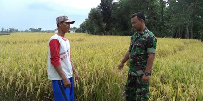Babinsa Koramil-14/Mondokan Komsos dengan Petani Desa Pare