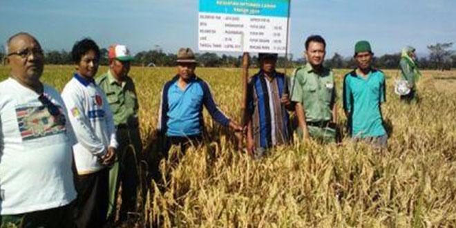 Panen Ubinan di Wilayah Kecamatan Pagerbarang
