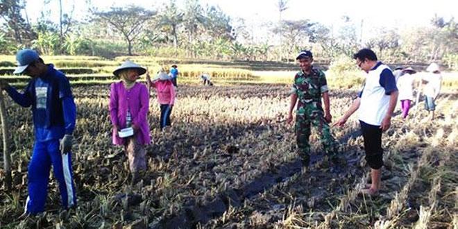 TNI Bantu Tanam Kedelai di Wilayah Kismantoro Wonogiri