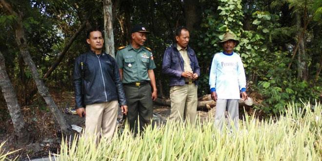 Danramil 21/Tegal Selatan Bersama PPL Pertanian Kecamatan Tegal Selatan Meninjauan Tanaman Padi