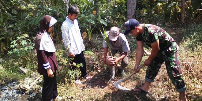 Babinsa Bulu Bersama Masyarakat Tanam Pohon Kelapa