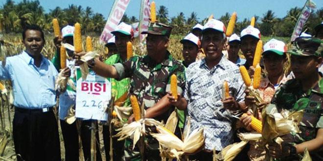 Kerjasama Babinsa-PPL-Petani Hasilkan 1 Ton Jagung di Sumberjati