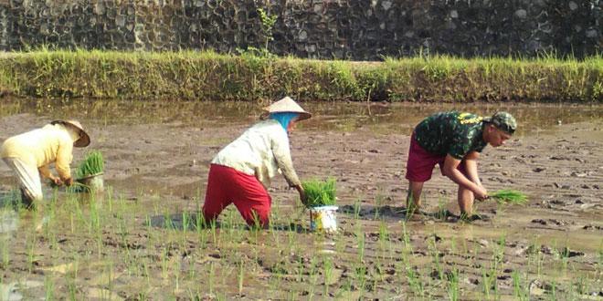 Anggota Babinsa Koramil-11/Tembarak Bantu Petani Menyiapkan Lahan