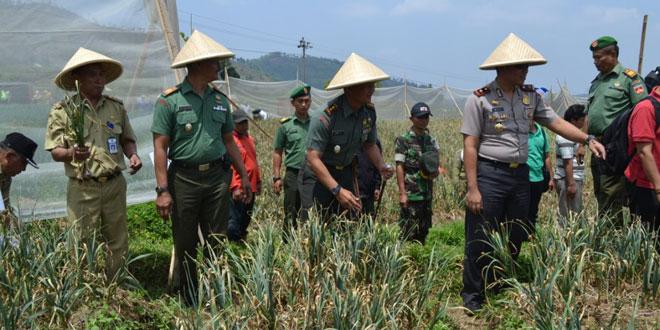Panen Demlot Bawang Putih di Desa Tuwel Kec. Bojong Kab. Tegal