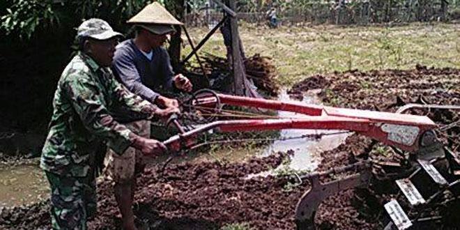Babinsa Koramil 02/Kedu Dampingi Petani Olah Lahan Tanam