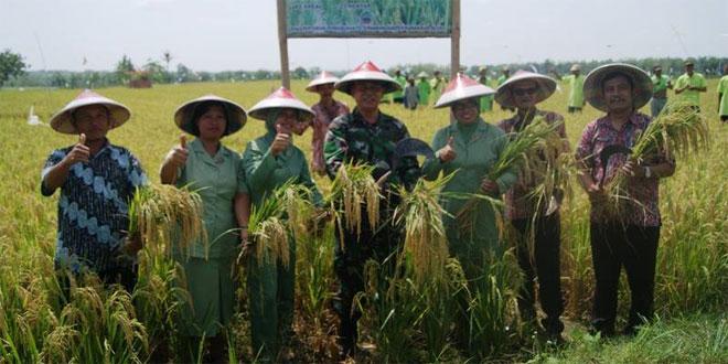Danramil 04/Tunjungan Ikut Pendampingan Petani Desa Greneng Panen Raya