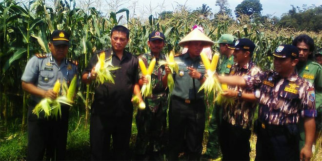 Dandim 0701/Banyumas Melaksanakan Panen Jagung Manis di Kec Sumbang