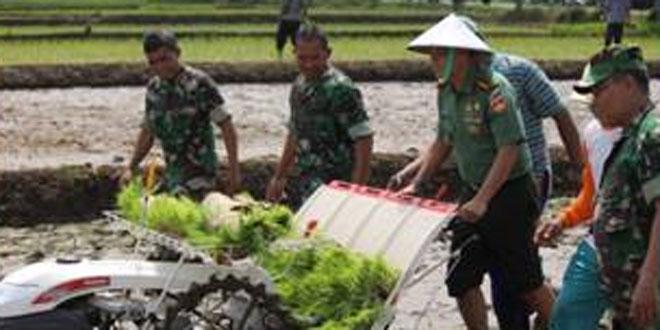 Kodim 0727/Karanganyar Melaksnakan Tanam Padi Serentak di Wilayah Jajaran