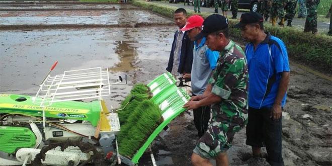 Danramil 19 Bumijawa Mengikuti Kegiatan Tanam Padi Serentak di Desa Kesuben