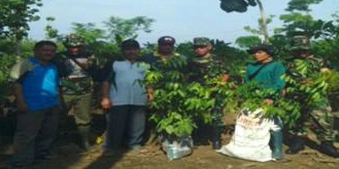 Koramil 13/Kedungbanteng Melaksanakan Penanaman Pohon di TPU Mbah Ketapang Desa Tonggara