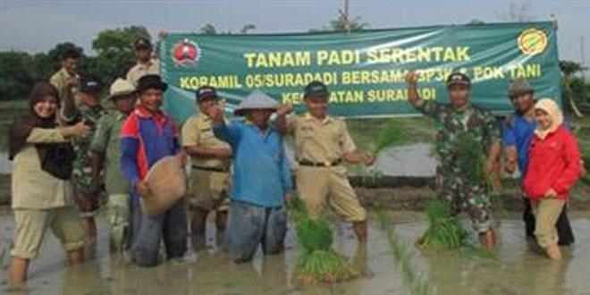 Babinsa Koramil 05/Suradadi Tanam Padi Bersama di Desa Bojongsana Kec.Suradadi