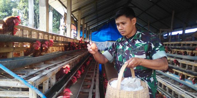 TNI Bantu Tingkatkan Kesejahteraan Rakyat dengan Motori Budidaya Ayam Petelur