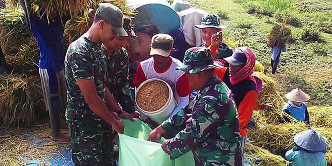 Anggota Koramil 06/Penawangan Bantu Petani Panen Padi