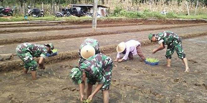 Babinsa Koramil 06/Jumo Membantu Petani Tanam Padi