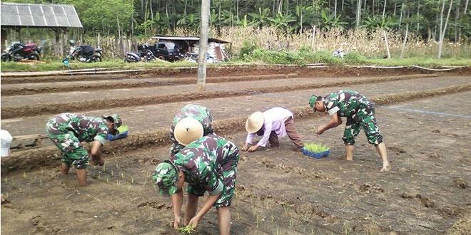 Babinsa Koramil 06/Jumo Kodim Temanggung Membantu Petani Tanam Padi