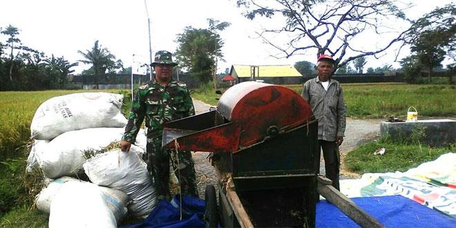 Babinsa Ramil 10/Berbah Bantu Petani Bulak Tanjung Panen Padi