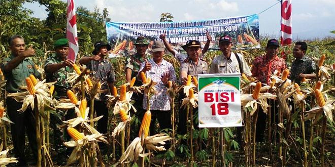 Koramil 09/Pamotan Bersama Lembaga Masyarakat Desa Hutan Lakukan Panen Raya Jagung