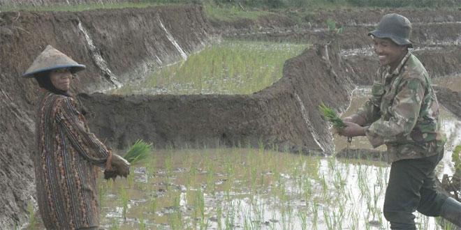 Babinsa Desa Tlogo Turun Kesawah Bantu Petani Menanam Padi