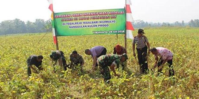 Intensifikasi Kedelai oleh Distan DIY di Wilayah Kodim 0731/Kulonprogo