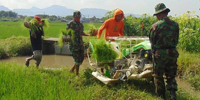 Babinsa Gunung Sari Dampingi Petani Laksanakan Tanam Padi Sistem Jarwo Dengan Alat Transplanter