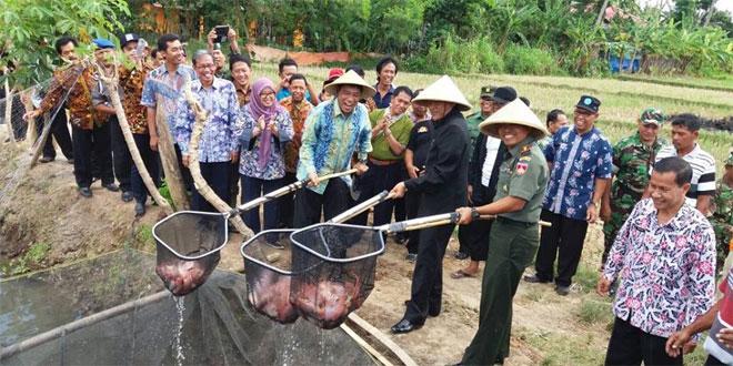 Dandim 0732/Sleman Bersama Bupati Sleman Panen Raya Mina Padi di Dusun Kuton