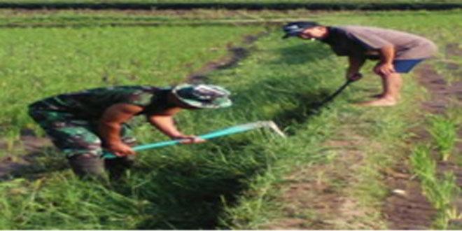 Babinsa Bantu Petani Bersihkan Saluran Irigasi
