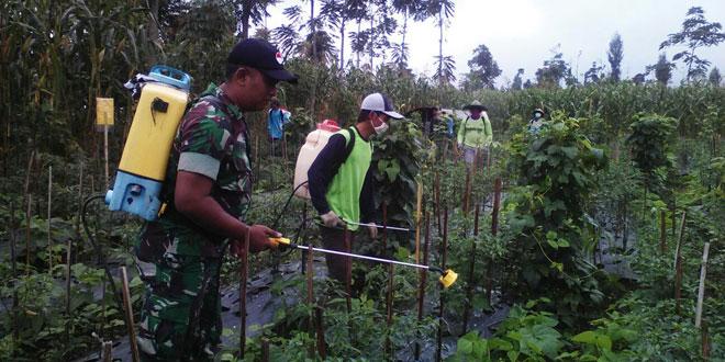 Babinsa Munggangsari Koramil 04/Ngadirejo Meninjau Tanaman Cabe