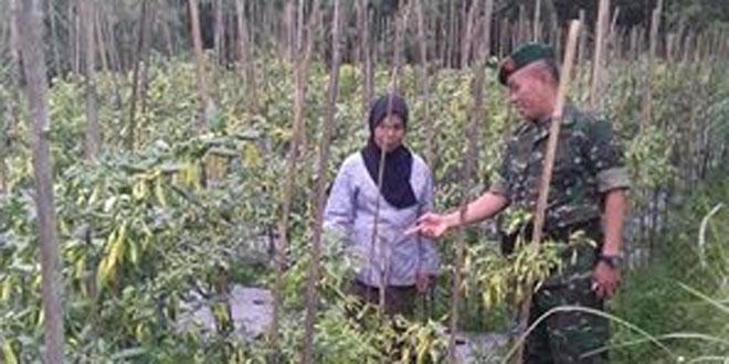 Hortikultura Jadi Primadona Petani Ngablak