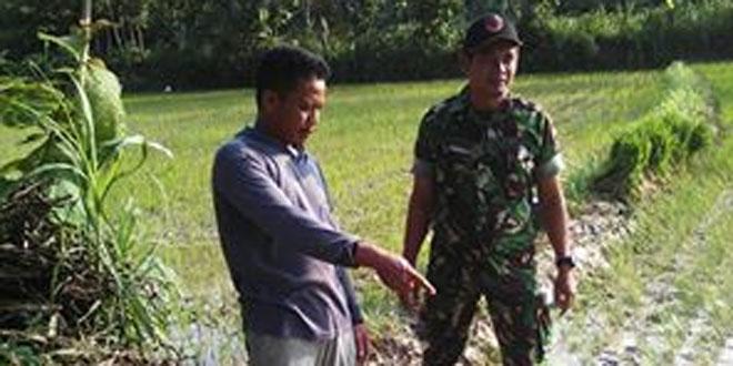 Koramil 03/Sulang Laksanakan Pendataan Realisasi Tanam di Wilayah Binaan