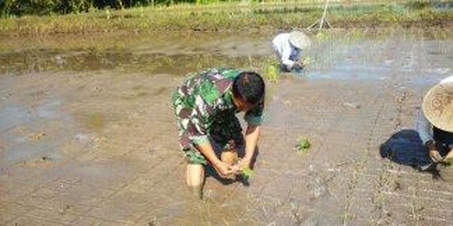 Koramil Magelang Utara Dampingi Petani
