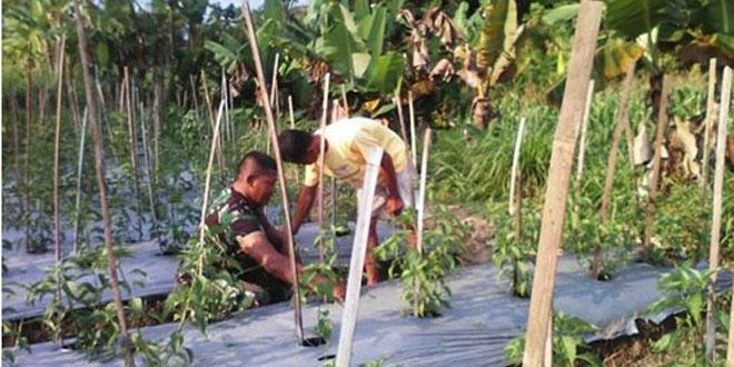Babinsa Koramil 07/Ngemplak Pantau Tanaman Cabe Dusun Grogolan