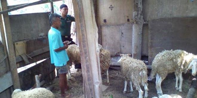 Babinsa Koramil 13/Ngampilan Memeriksa Penjualan Hewan Qurban di Wilayah Binaannya